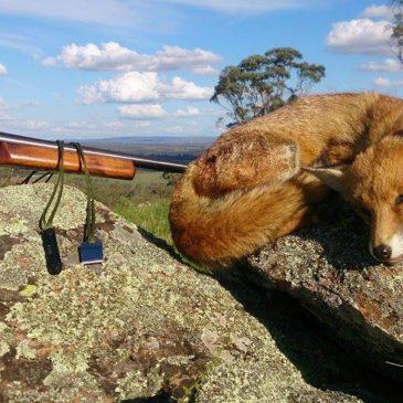 Shotgunning for Foxes!